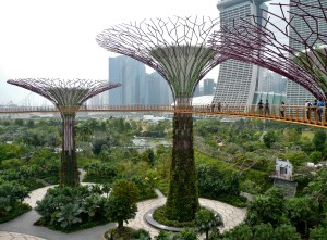 Singapore - Gardens by the Bay (21)